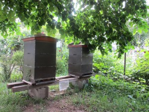Bienen im Niesenbergergarten