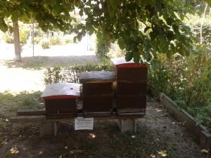 Bienenstöcke in der Niesenbergergasse