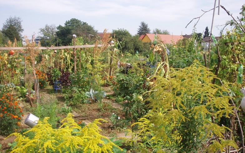 Wildkräuter Workshops im Mutter Erde Garten