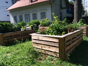 Gemeinschaftsgarten Schönau 3