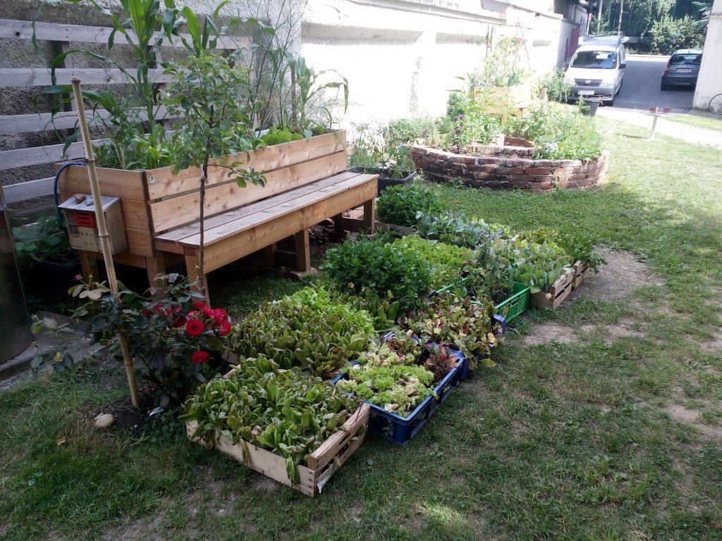 Jungpflanzen am Standort Attemsgarten 6.Juli 2016