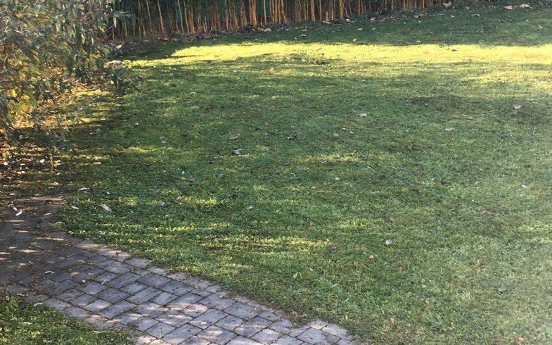 Grundstück sucht GemeinschaftsgärtnerInnen in Straßgang!