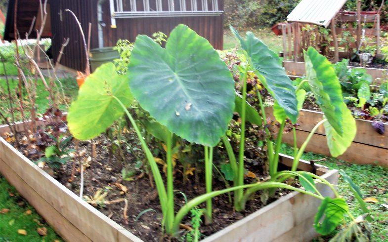 Gibt es finanzielle Förderungen für Urban Gardening Projekte und Gärten?